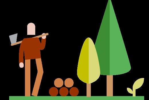 Cijfers over bos en houtoogst