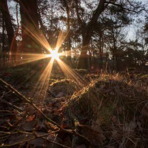 Winters bos, foto: Marco van de Burgwal