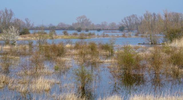 Oude Waal met overstroomde graslanden en ruigtes
