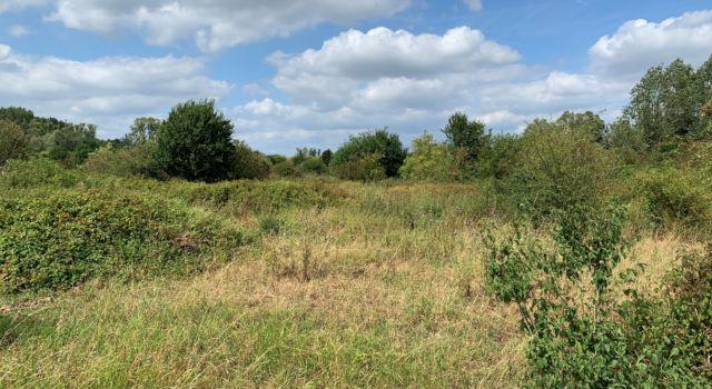 Het landschap waar grauwe klauwieren broeden in de Gelderse Poort.
