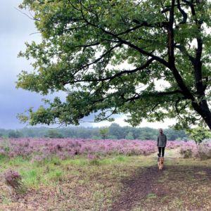 Mulderskop, boswachterij Groesbeek