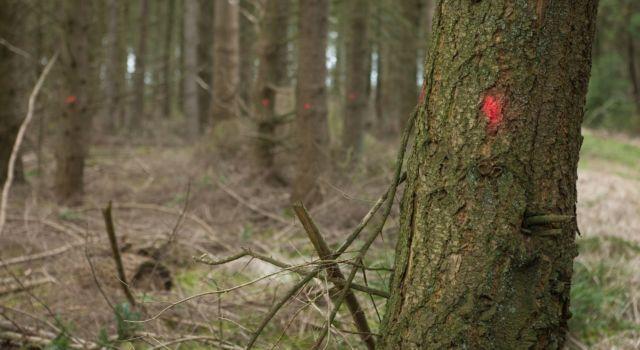 Een orde stip markeert bomen die weg gaan