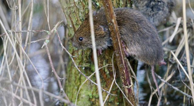 Een struik is de redding voor deze muis