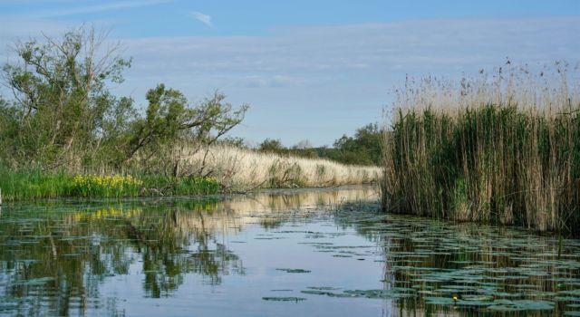 Rijnstrangen voorjaar 2020 met hogere waterstanden