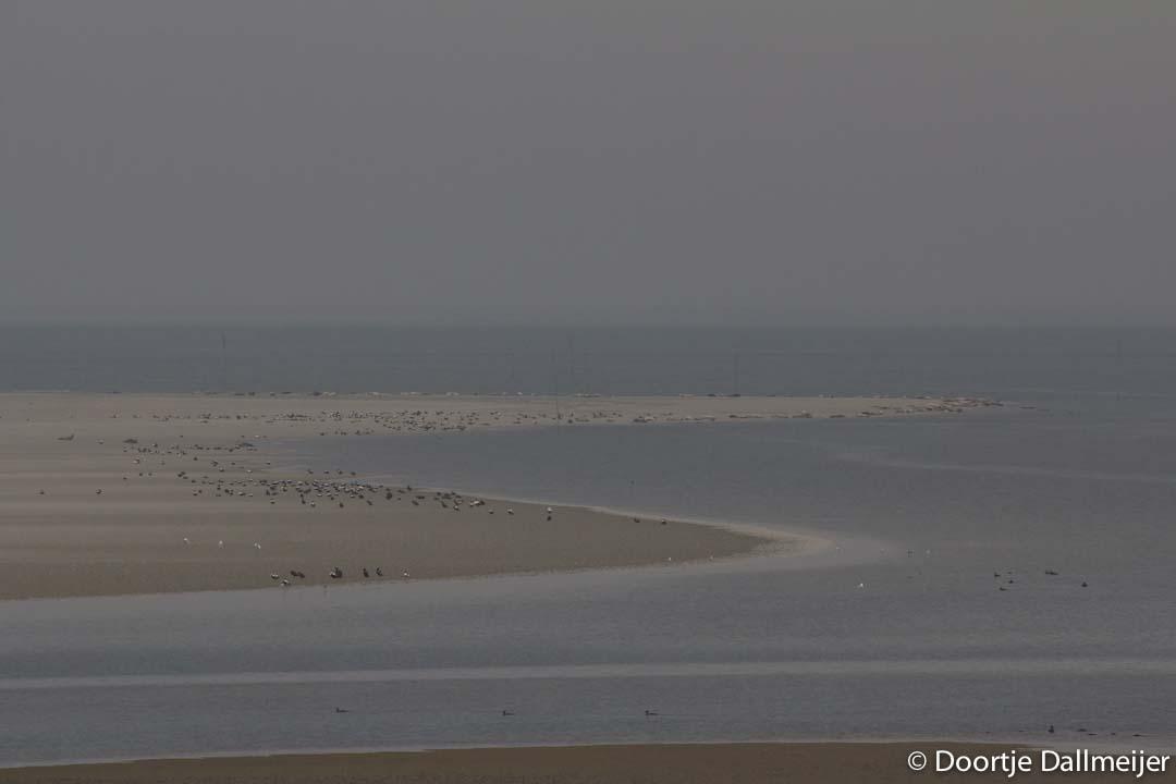 Oostpunt Rottumerplaat met eiders en zeehonden