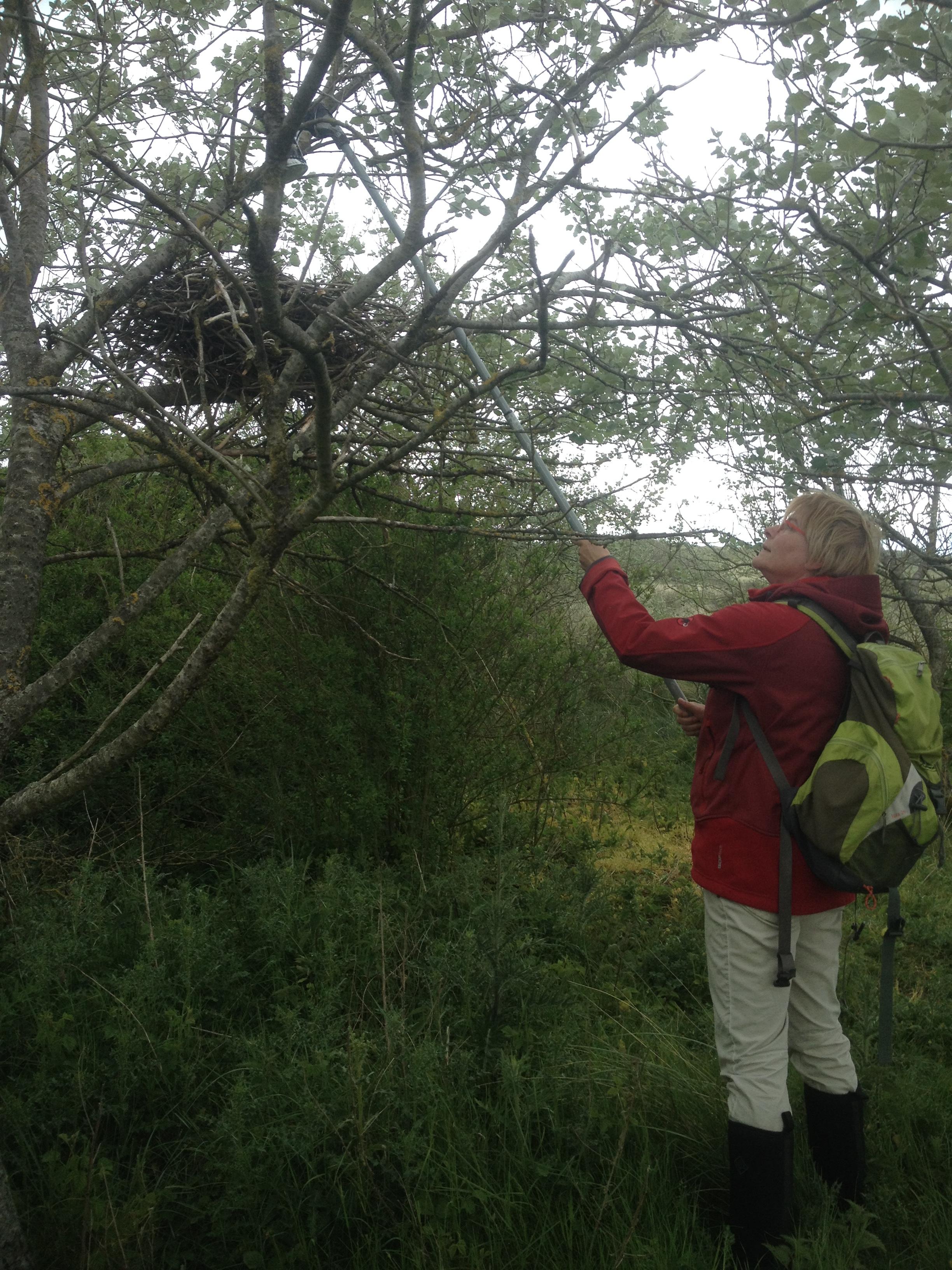 Controle van een boomnest.