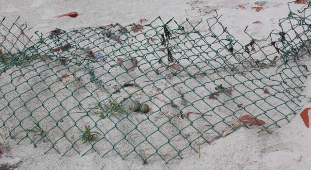 nest met gaasbescherming (foto: Hella Smit)