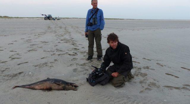 vogelwachter Sjoerd Dirksen en natuurfilmer Melchert Meijer zu Schlochtern bij dode bruinvis Rottumerplaat, juni 2017