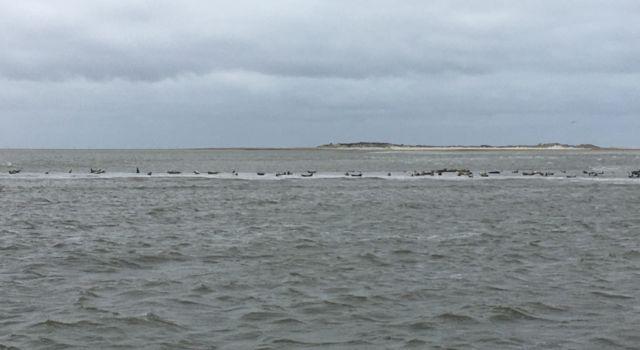 Eerste blik op Rottumerplaat vanaf een schommelende boot