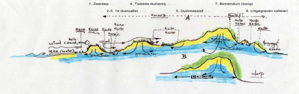 Voorbeeld natuurlijke overgang van west naar oost