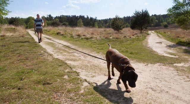 Honden weer aan de lijn