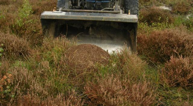 Opgraven mierennest Groot ganzenveld (foto: Ruud Brouwer)