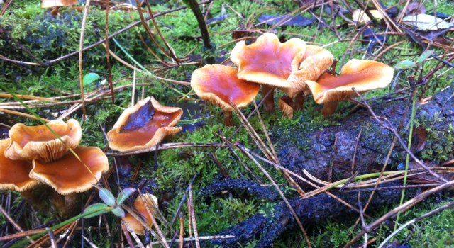 Kleurenpracht in het bos: paddenstoelen