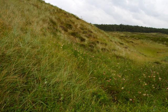 Hier is al lang weinig dynamiek, grassen en lage struiken gaan langzamerhand domineren.
