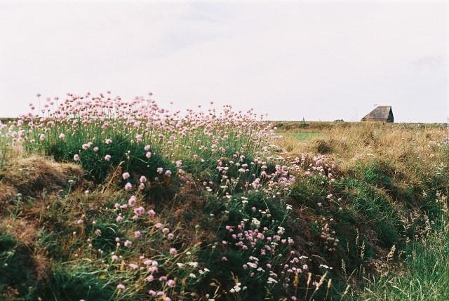 Hoge Berg, tuinwal met Engelsgras F1000003 web