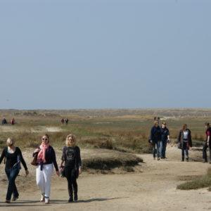Slufter, wandelaars, Texel