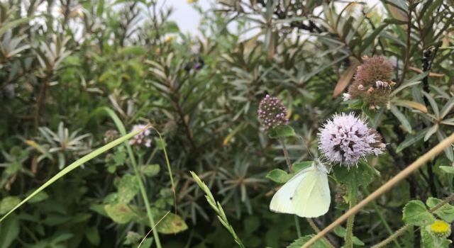 Vlinder wandelroute paal 28