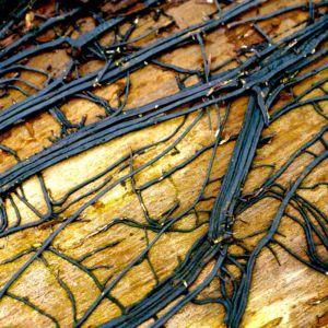 Dood hout leeft, foto van Peter Ampt