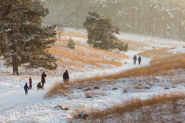 Leesterheide in de sneeuw