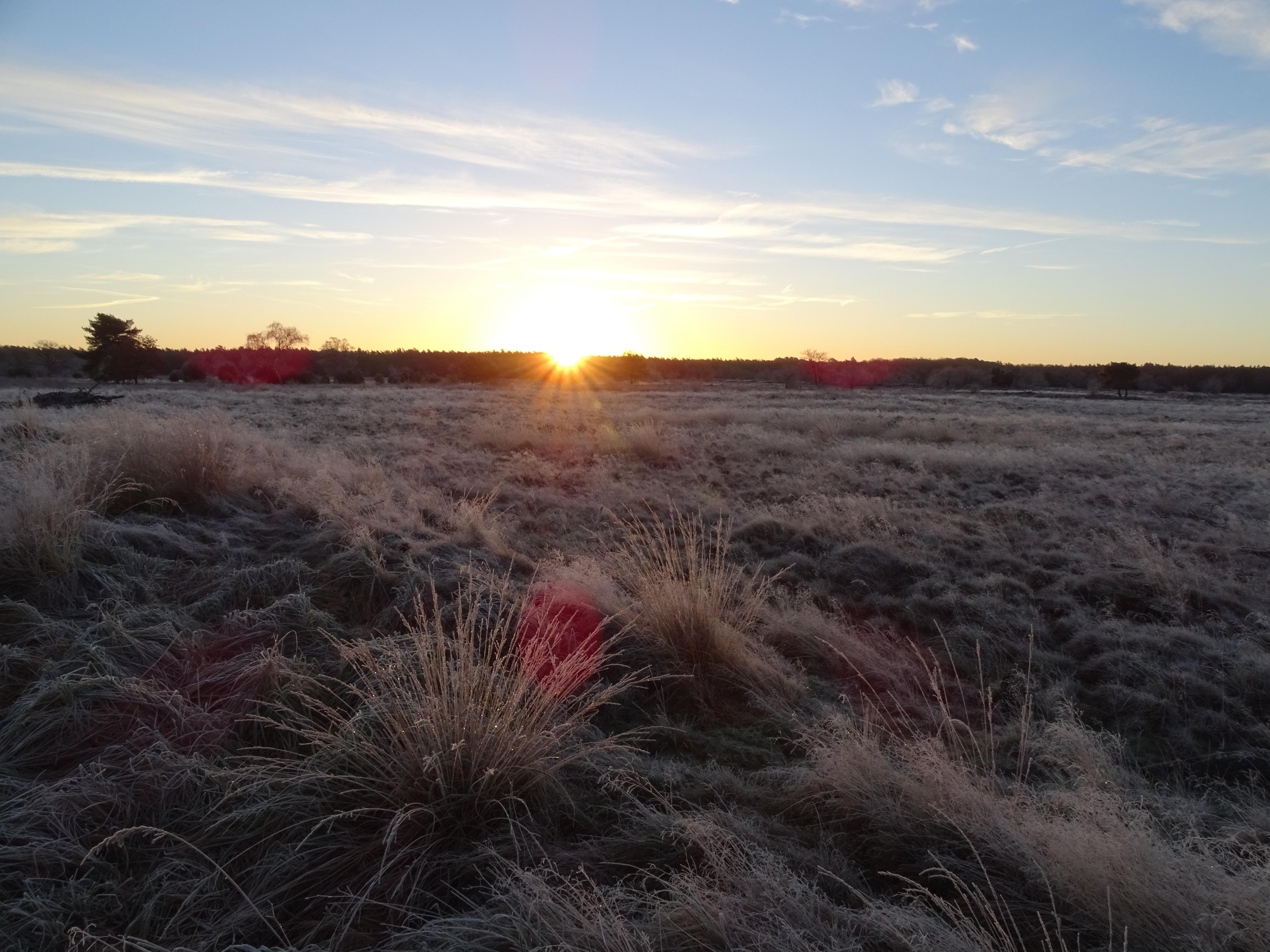 de zon knipoogt naar de witte heide
