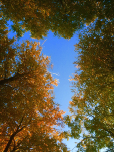 loofbomen in de herfst