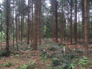 Bos met houtproductie als hoofddoel