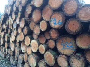 Op deze foto zie je houtstapel 422, het zijn 3,60 meter lange stammen en ze worden gebruikt als zaaghout.
