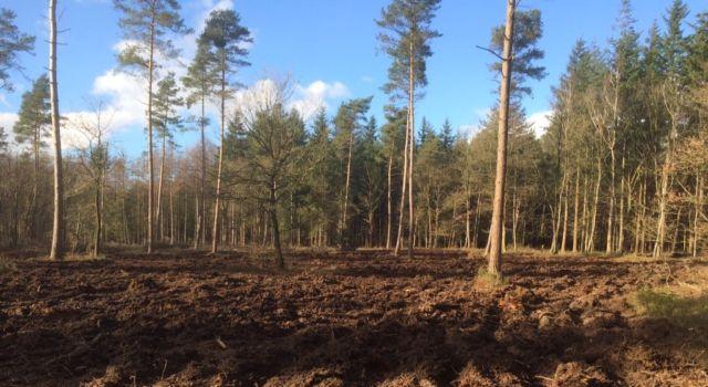 Verjongingsvlakte met zaadbomen van grove den en eik op de vlakte en douglas, lariks en berk aan de randen