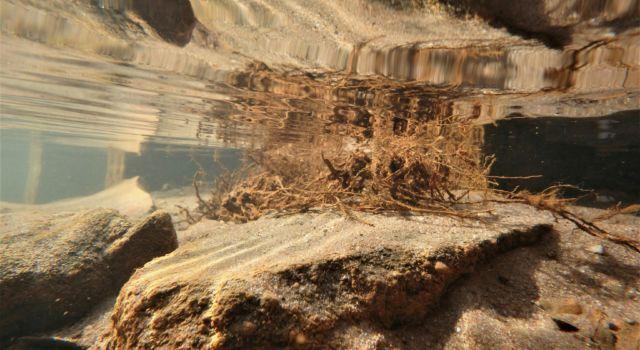 spiegeling onder water
