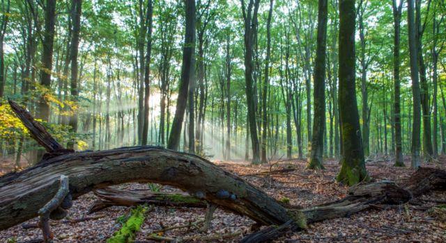Zonlicht schijnt door de bomen in het Speulderbos. Een dode boom als liggend stilleven op de voorgrond