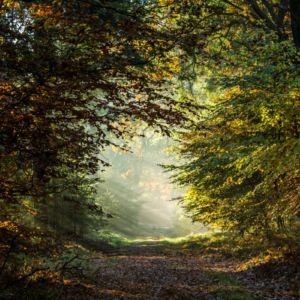 Herfstlaantje in het bos. Foto Myrthe Erkelens