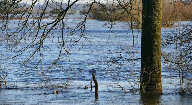 Ondergelopen uiterwaarden: hoogwater bij ruïne de Nijenbeek