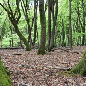 Dansende bomen in lentegwaard. Drie