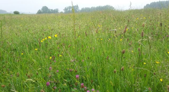 bloemrijk grasland