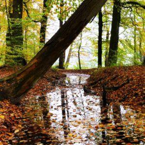 Herfst in het Renkums Beekdal: blaadjes in de beek. Foto Janske Blijleven