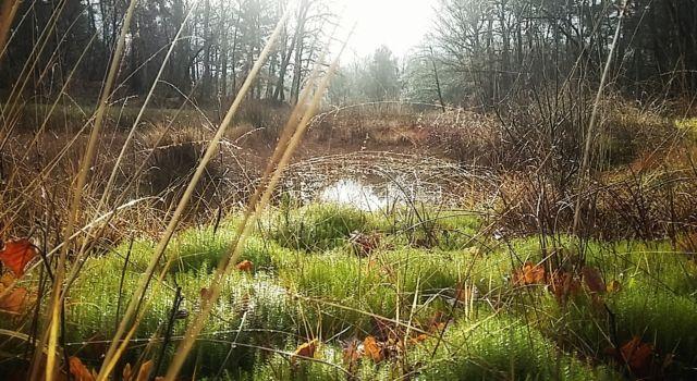 mos en hooiland in 'Het Paradijs' van het Renkums Beekdal