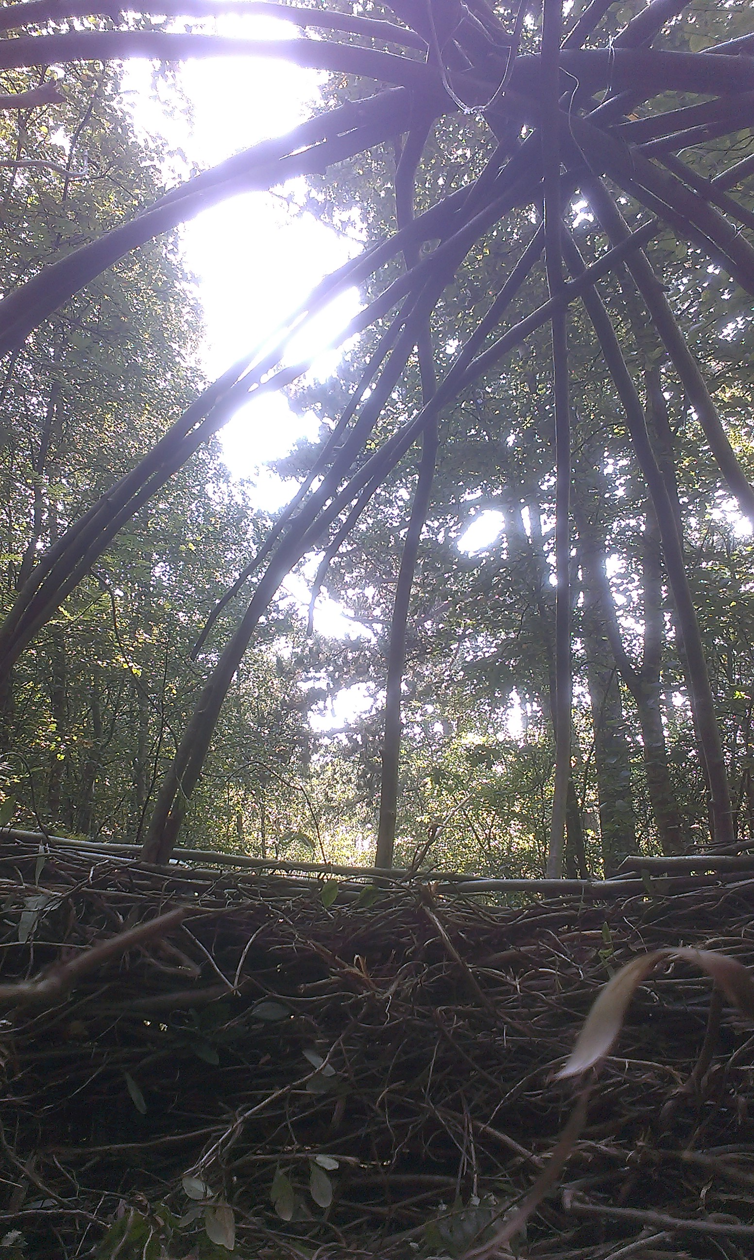 het nest van boswachter Pieter Schaper