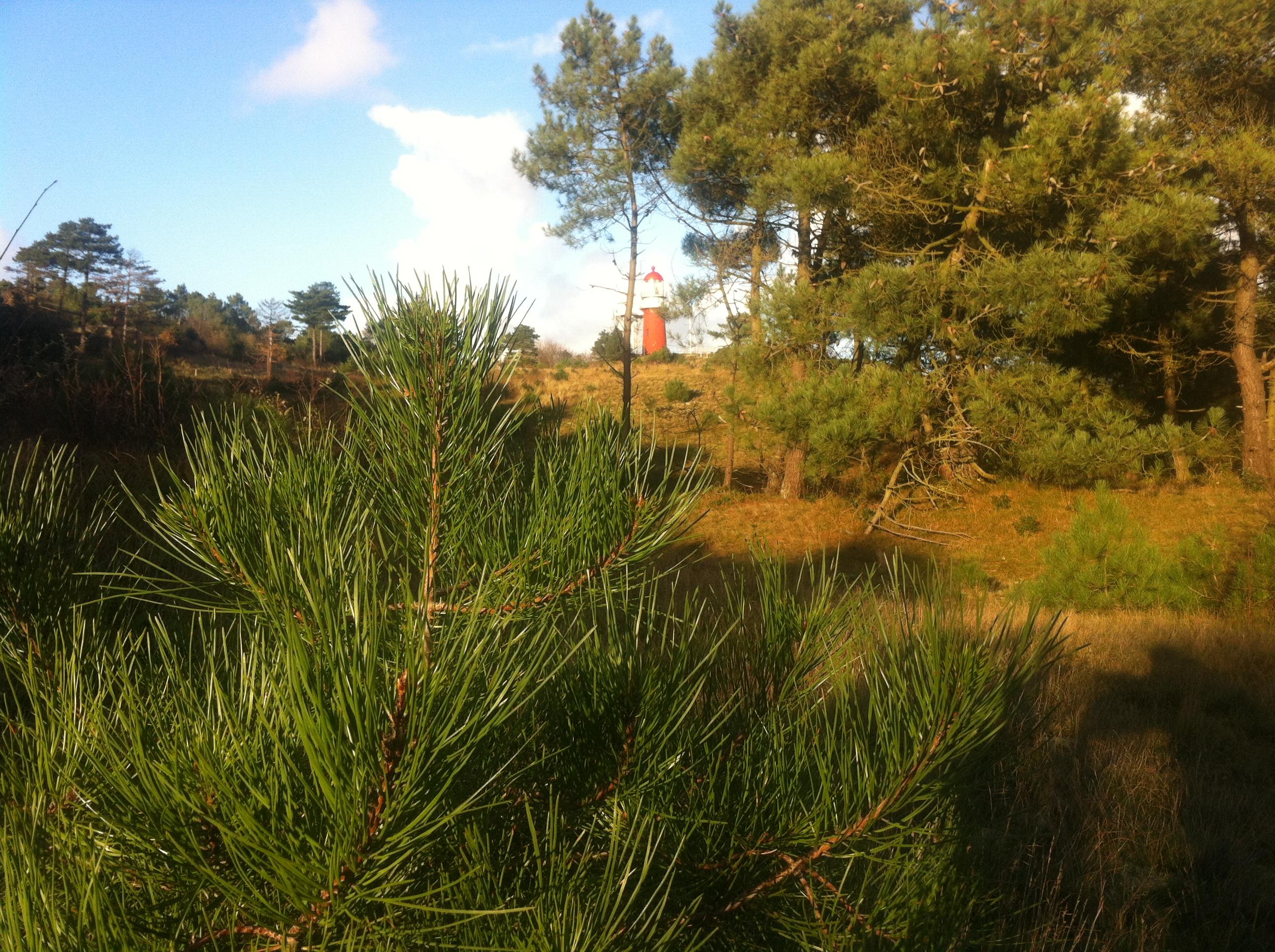 locatie kerstbomen zagen