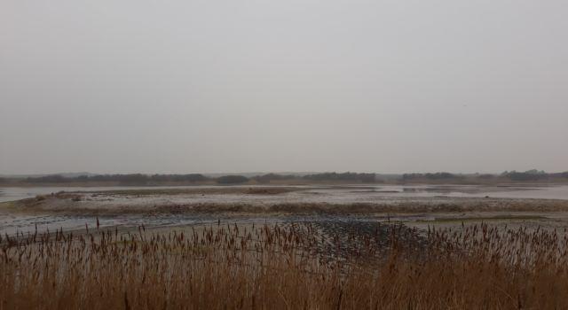 schelpeneiland kroon's polder