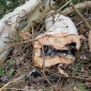 dood hout zagen