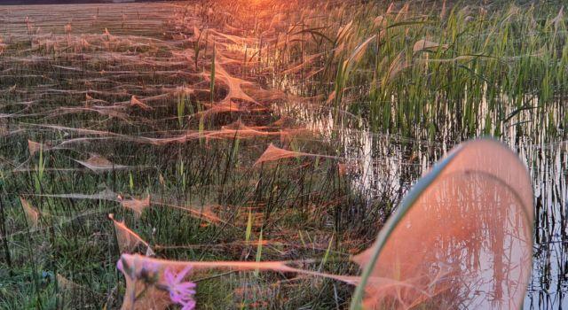 spinrag kroon's polders