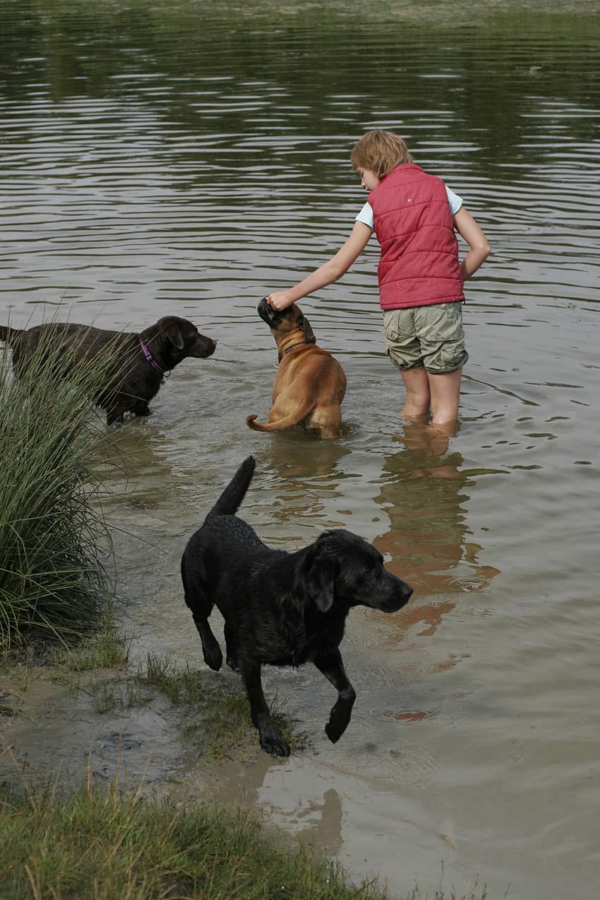 Lekker spelen bij het hondenstrandje