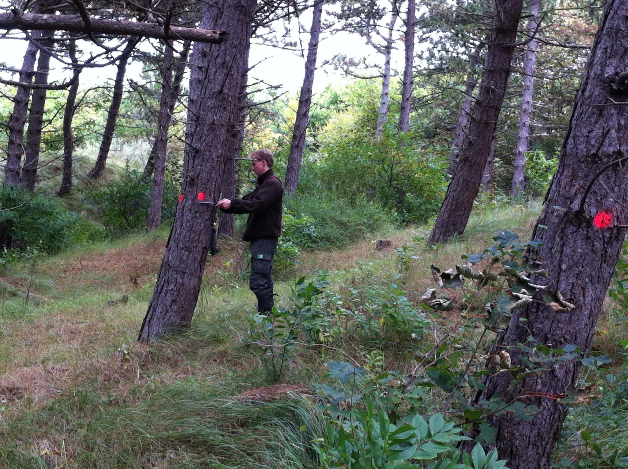 In proefvlakken is gekeken welke bomen vanuit natuurontwikkeling in aanmerking komen om gekapt te worden en welke hoeveelheid hout deze bomen vervolgens opbrengen.