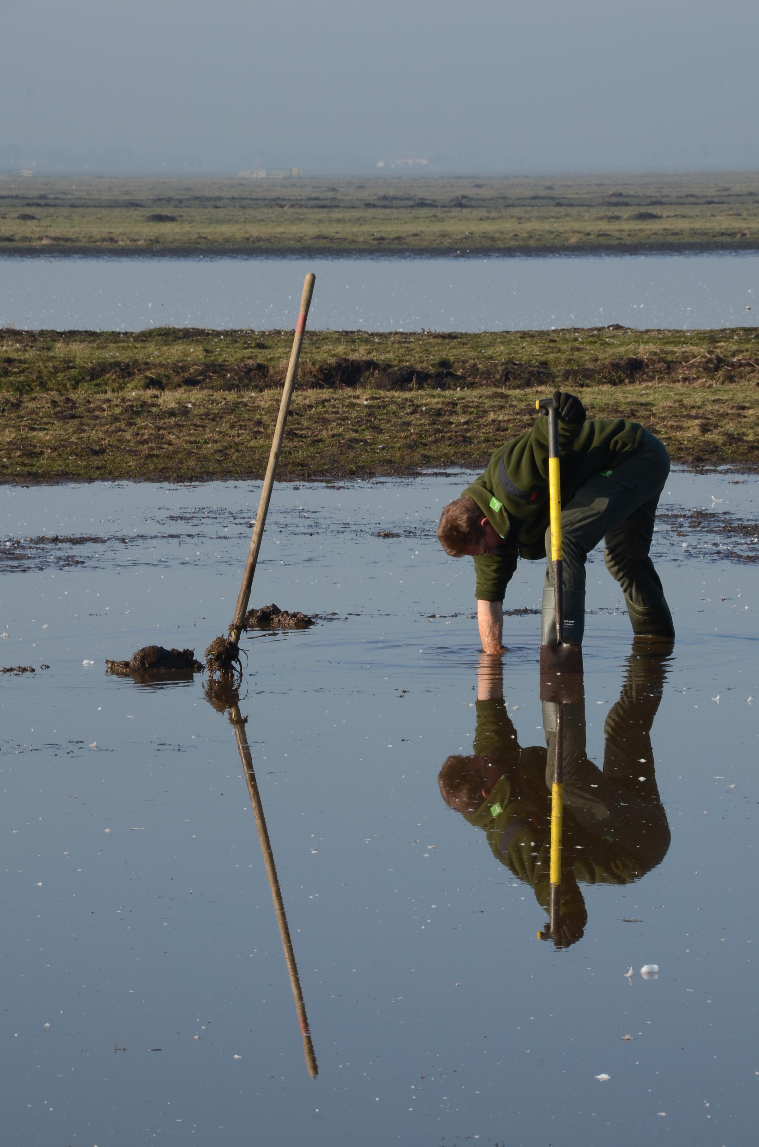 Terreinmedewerker Jan-Willem maakt een greppel open om te zorgen voor ideaal kuikenland
