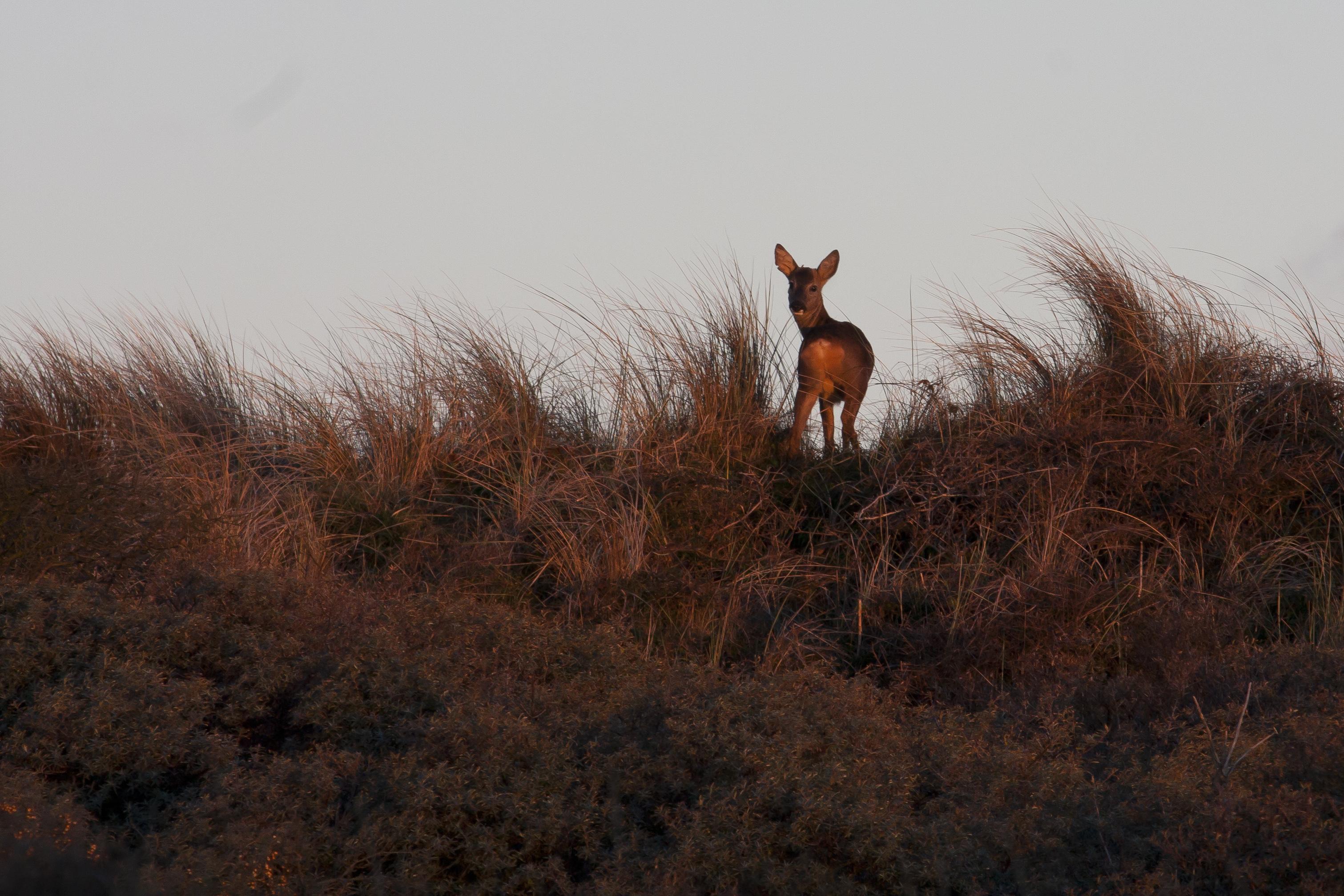 Genieten van reeën en de zonsondergang - foto Mark Kras