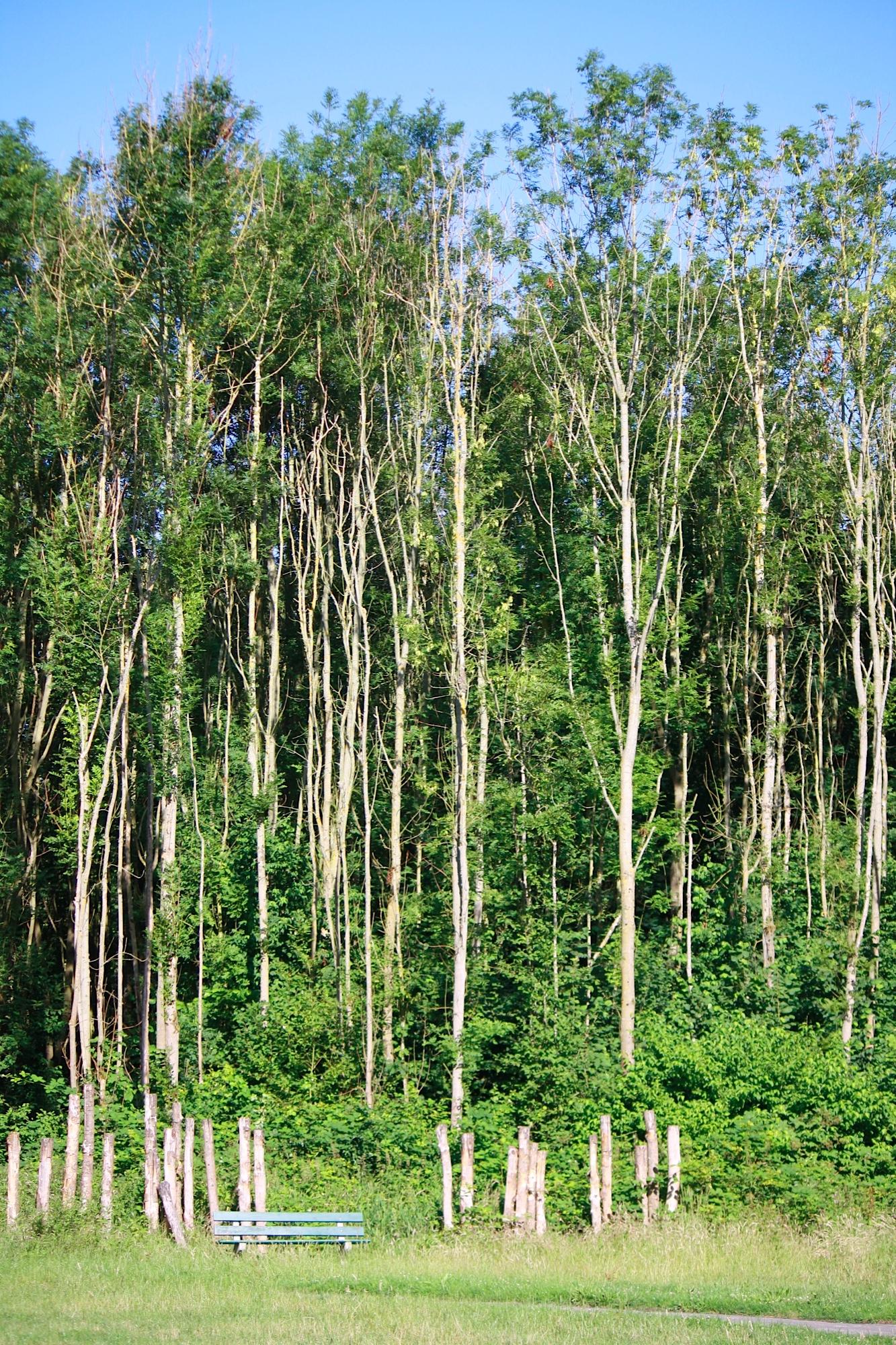 Houtoogst Balij bomen