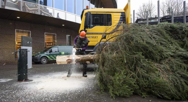 De boom wordt ter plaatse op maat gezaagd.