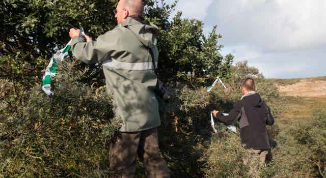 Door linten op te hangen worden waardevolle gebieden en struiken beschermd tijdens het werk (foto Mark Kras)