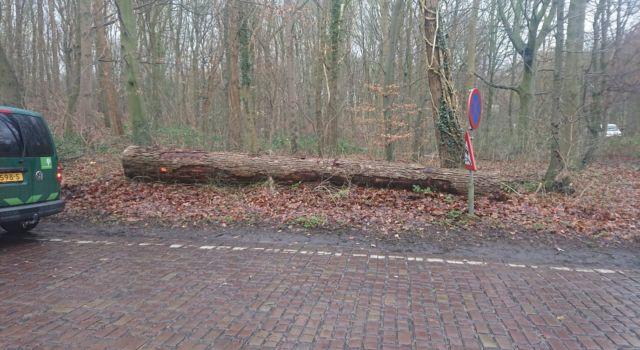 Gevelde iep langs de Leidsestraatweg in het Haagse Bos - foto Stefan Wijfje