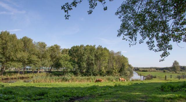 bieslandse polder